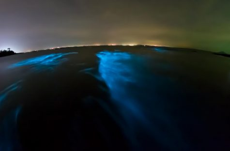 Bioluminescent plankton. Glowing wave with long exposure.